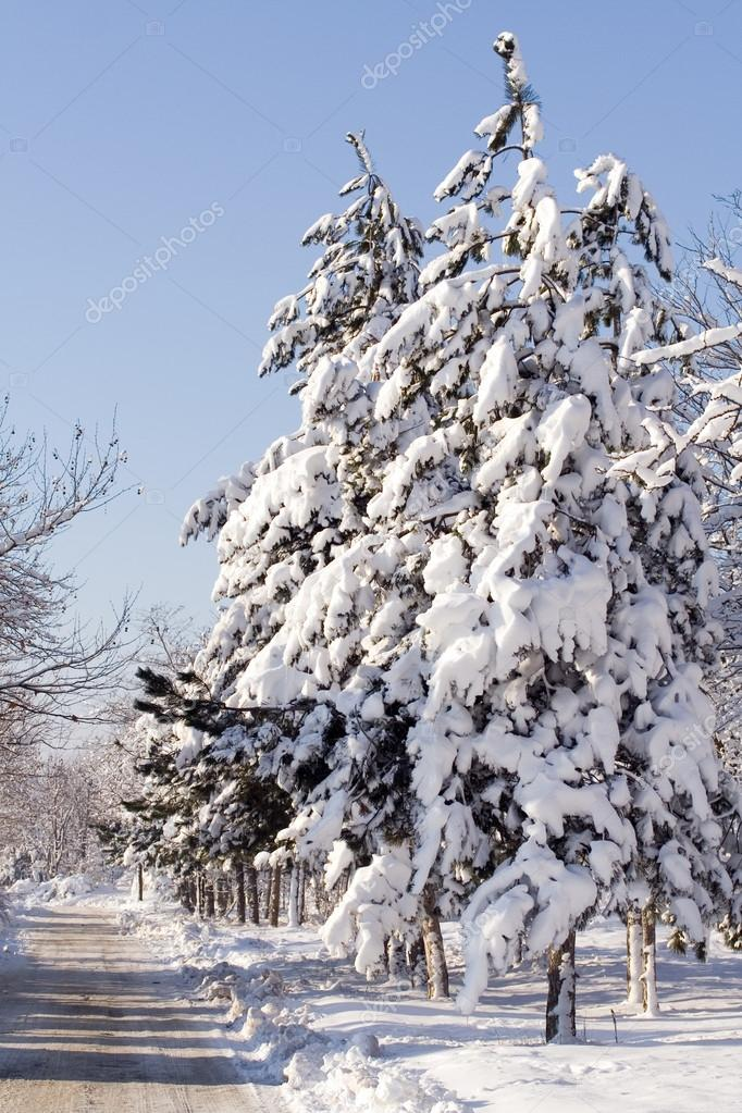 Winter scene  — Stock Photo #13392688