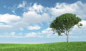 Tree on the grass — Stock Photo