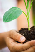 Small plant in the palm — Stock Photo