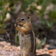 Squirrel — Stock Photo #34905027