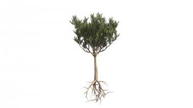 木の成長 — ストックビデオ