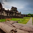 Skinny dog stands on the steps of Angkor Wat — Stock Photo