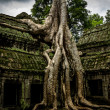 Tree of Ta Prohm, Angkor Wat — Stock Photo