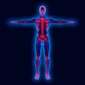 Human anatomy on xray — Stock Photo