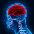 Human brain and scull in x-ray - Stock Photo