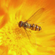 Stock Photo: Wasp bee on the flower