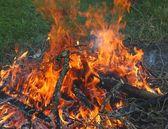 Burning branches — Stock Photo