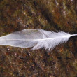 Feather on a mud — Stock Photo