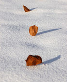 Three Yellow leaves on the snow — Stockfoto