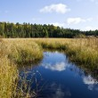Beaver Pond, Algonquin Park — Stock Photo