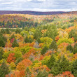 Fall Colors, Algonquin Park — Stock Photo