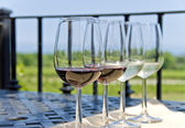 Wine Tasting by the Vineyard — Stock Photo