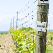 ストック写真: Row of Chardonnay Vines in Spring