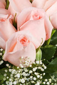 Pink Roses with Babys Breath — Stock Photo