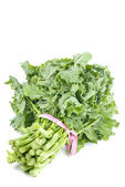 Bunch of Rapini Isolated on White — Stock Photo