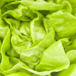 Stock Photo: Hydroponic Lettuce