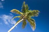 Palmera contra el cielo azul profundo — Foto de Stock