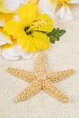 Starfish and Lei on the Beach — Stock Photo