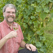 Stock Photo: MHolding Glass of White Wine in Chardonnay vineyard