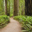 CaliforniRedwood National and State Parks Near Crescent City — Stock Photo #12674557
