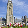 Parliament Hill (Ottawa) and Tulips - Stock Photo