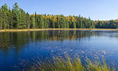 Beaver Pond Trail Algonquin Park Canada — Stock Photo