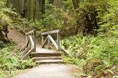 Redwood nationella och parker stat kalifornien — Stockfoto