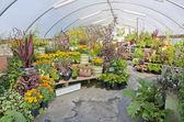 Gewächshaus mit pflanzen und kräutern gefüllt — Stockfoto