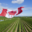 Stock Photo: CanadiFlag Flying Over Vineyard in NiagarWine Region