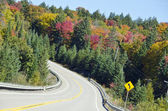 Colorful Trees by the Highway — Stock Photo