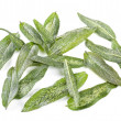 Fried Sage Leaves — Stock Photo