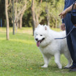 Walking dog in the park — Stock Photo