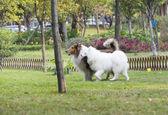 Due cani nell'erba — Foto Stock