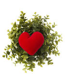 Red heart pillow with plant — Stock Photo