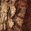 Bark background — Stock Photo