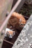 Cat and kitten — Stock Photo