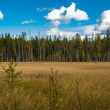 Stock Photo: Swamp. Hiking in Karelia.