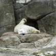 Foto Stock: Polar bear in Zoo