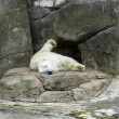 Foto de Stock  : Polar bear in Zoo