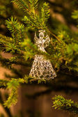 Angel on the Christmas tree — Stock Photo