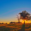 Majestic sunset over a pasture field with a lonely tree — Stock Photo