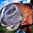 Funny horses nose - Stock Photo