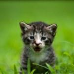 Adorable little kitten — Stock Photo