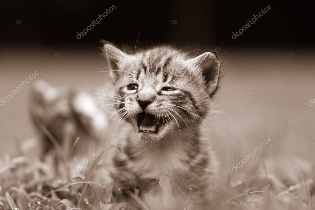 Adorable little kittens a great pet to adopt and own — Stock Photo #12590001