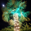 Palm christmas tree - Stock Photo