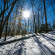 Sunshine in winter forest — Stock Photo