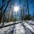 Stock Photo: Sunshine in winter forest