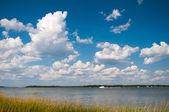 Everglades — Stockfoto