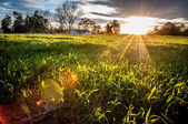 Sunset over green field — Stock Photo