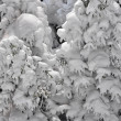 Snow covered trees — Stock Photo #14041101